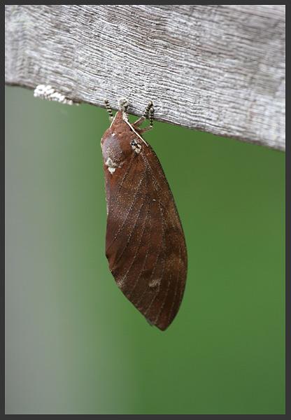- Borneo 2007