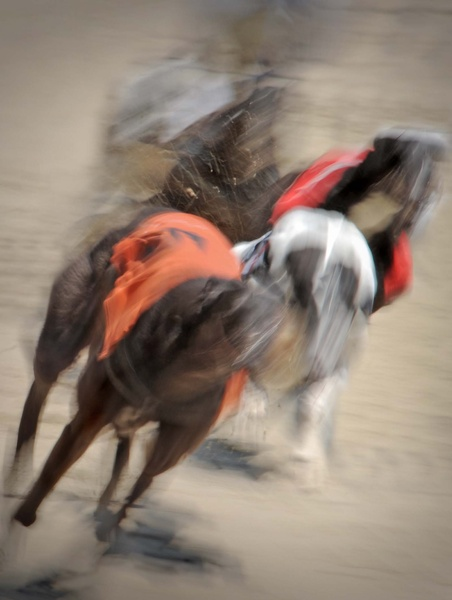 An impression of speed - Greyhouds Hove