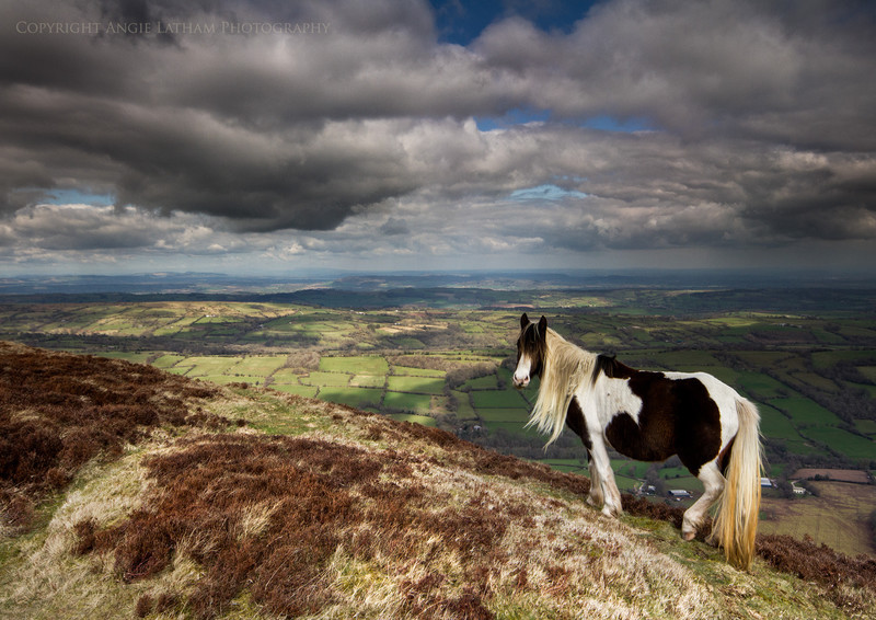 Pony on the edge - England & The Shires