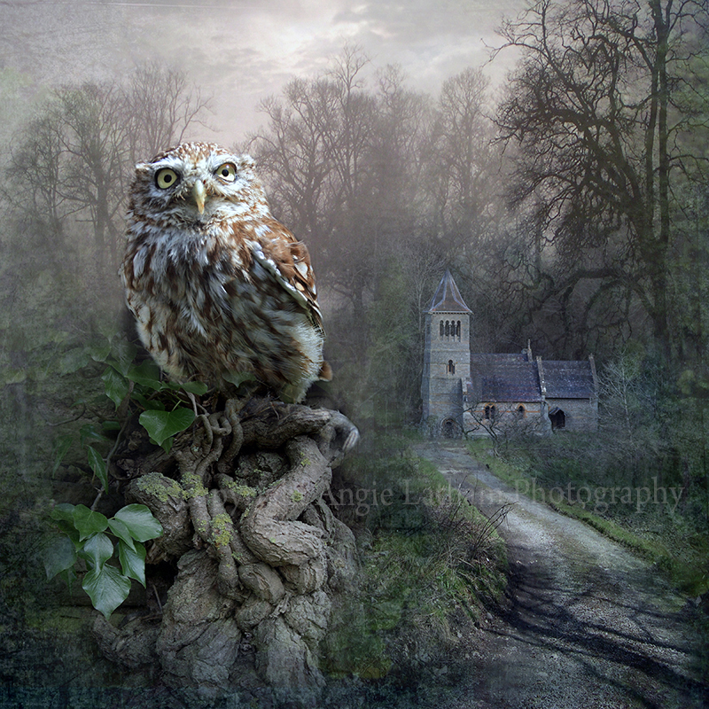 AS039 British Little Owl - Magic & Mystery