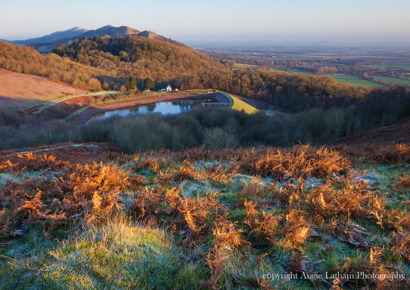 Golden Bracken - The Malvern Hills