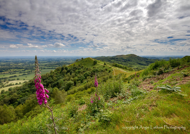 Midsummer's Walk 3 - The Malvern Hills