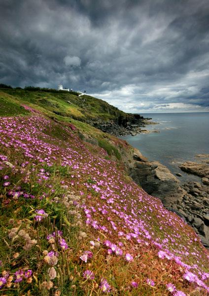 Flowering Lizard - Celtic Cornwall