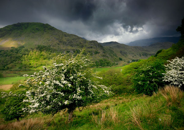 How Green Is My Valley - Celtic Wales