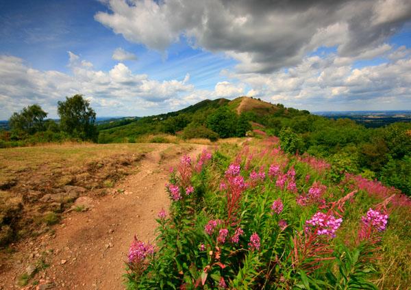Willowherb Summer - The Malvern Hills
