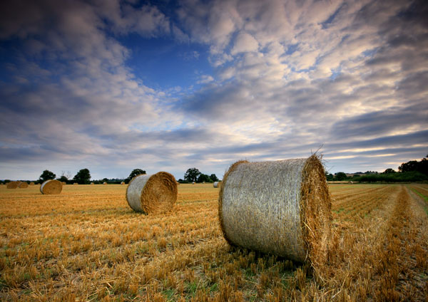 Harvest Time - England & The Shires