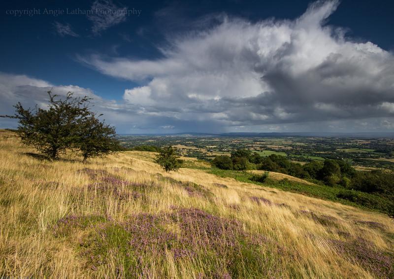 Heather & Gold - The Malvern Hills