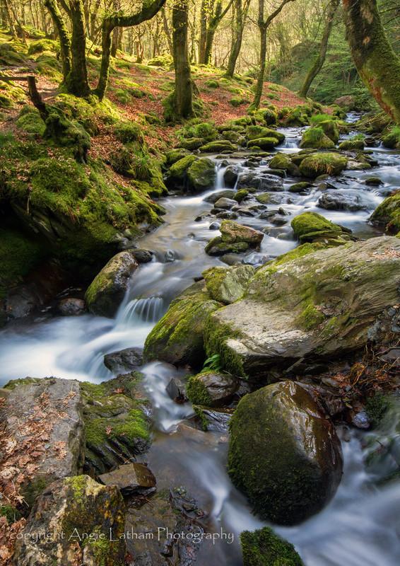 Above Dolgoch Falls - Celtic Wales