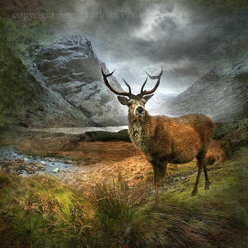 Monarch of the Glen , Glencoe - Spirit of the Highlands