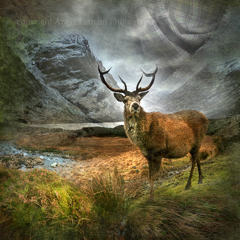 HM 005 Monarch of the Glen - Spirit of the Highlands
