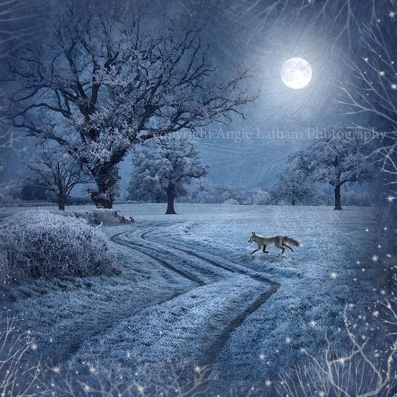 AS036 Frosty Mr Fox - Magic & Mystery
