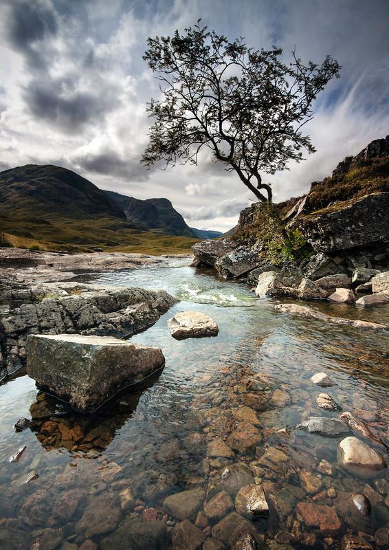 Glencoe Rowan Tree - Highlands of Scotland