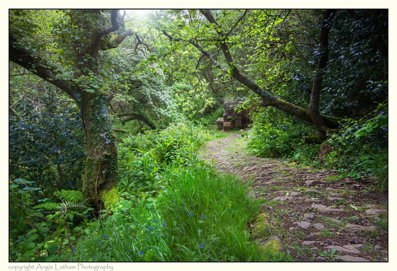 Path to St.Neot's Well, Cornwall - Holy Wells and Sacred Springs