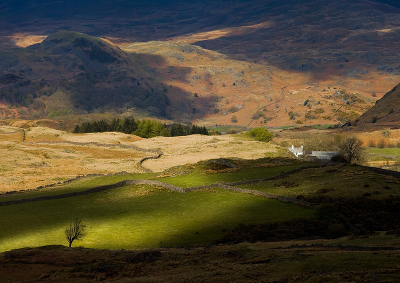 The cottage and the Tree - Lake District - England & The Shires