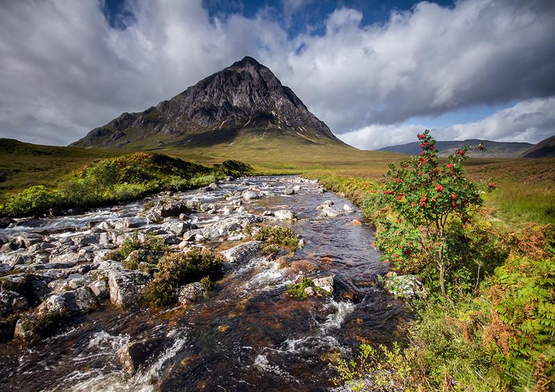 Mountain Rowan - Highlands of Scotland