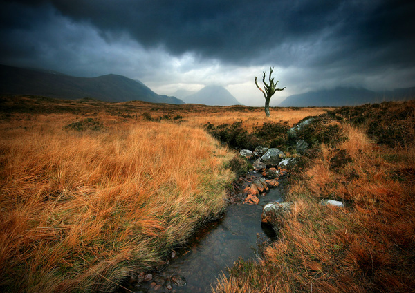 The Lone Tree - Highlands of Scotland