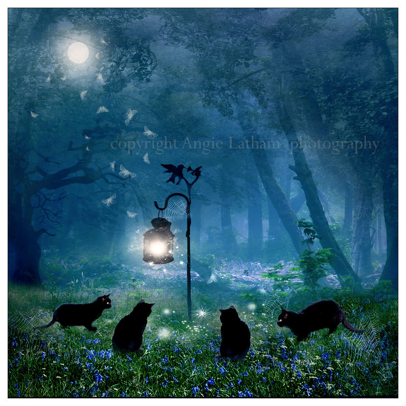 AS009 The Witches Cats - Magic & Mystery