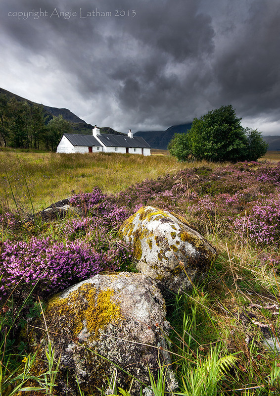Blackrock & Heather - Highlands of Scotland