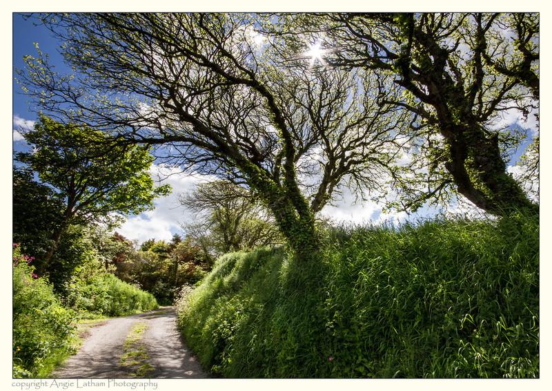 Cornish Lane in Spring - Celtic Cornwall