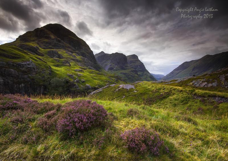 Glencoe Heather - Highlands of Scotland