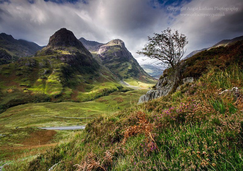 Glencoe Rowan Tree - Highlands of Scotland