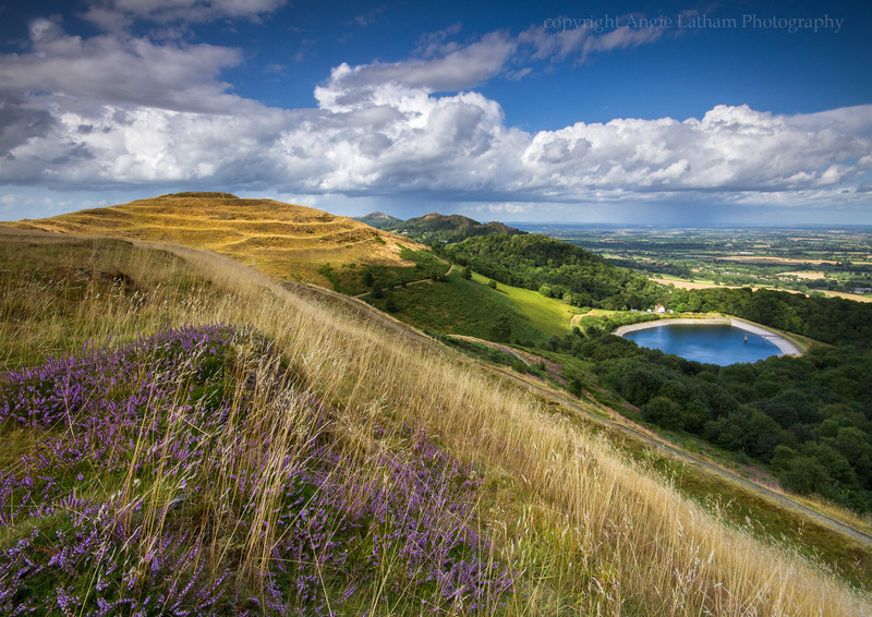 British Camp Heather - The Malvern Hills