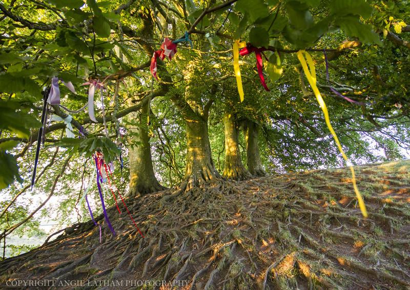 Avebury Trees - Ancient Sites