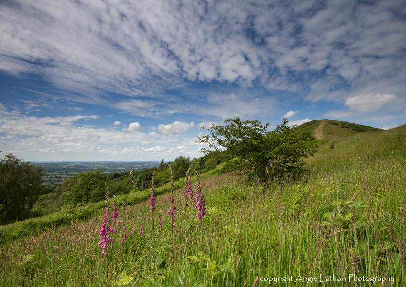 Midsummer's Walk - The Malvern Hills