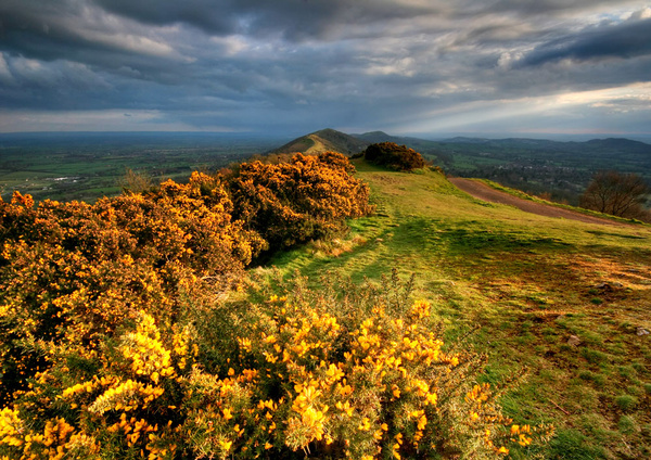 Winter Yellow - The Malvern Hills