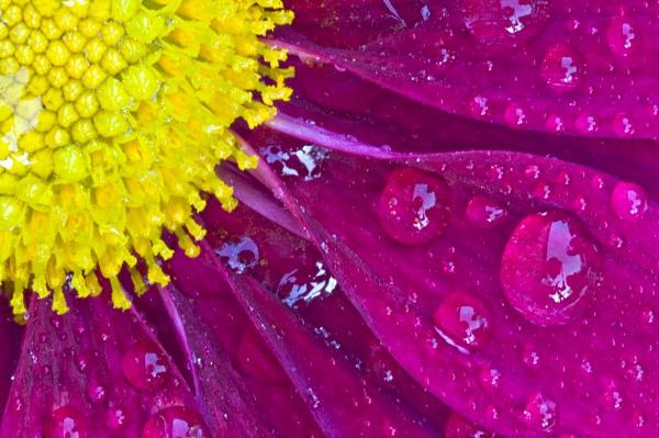 _MG_6509_edited-2 - Flower Studies