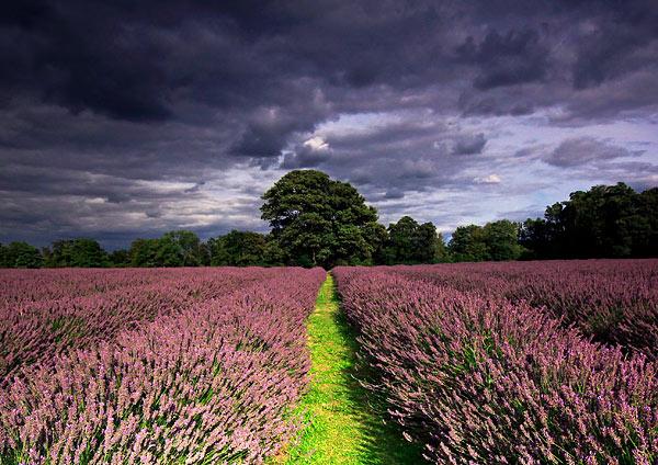 - England