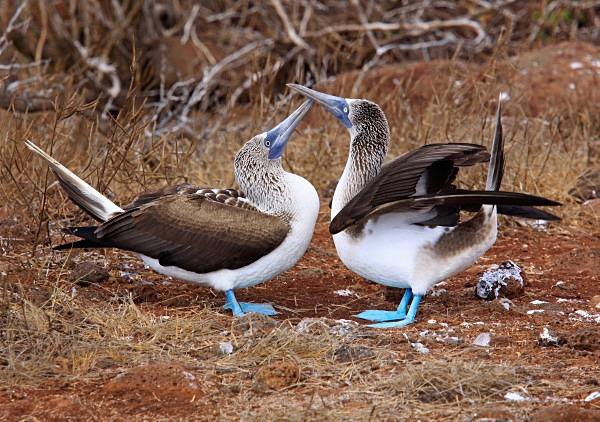 - Ecuador: Galapagos Islands