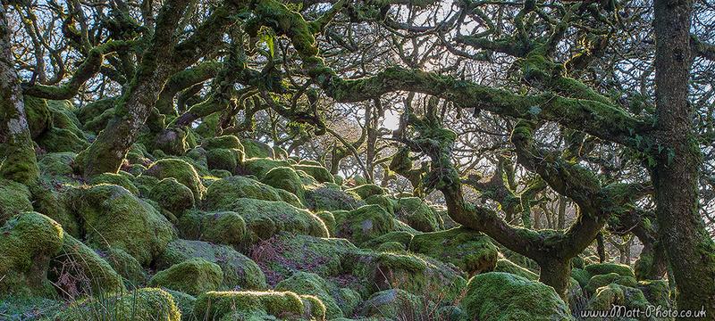 Wistmans Wood - Panoramic