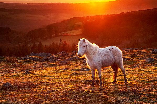 Horse on Dartmoor - Dartmoor