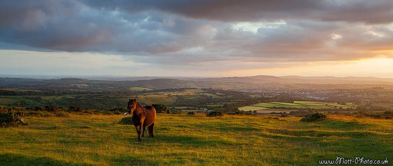Dartmoor Horse - Panoramic