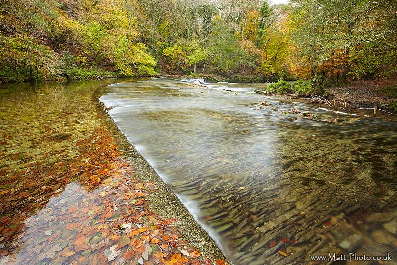 Plym Bridge Woods - South Devon