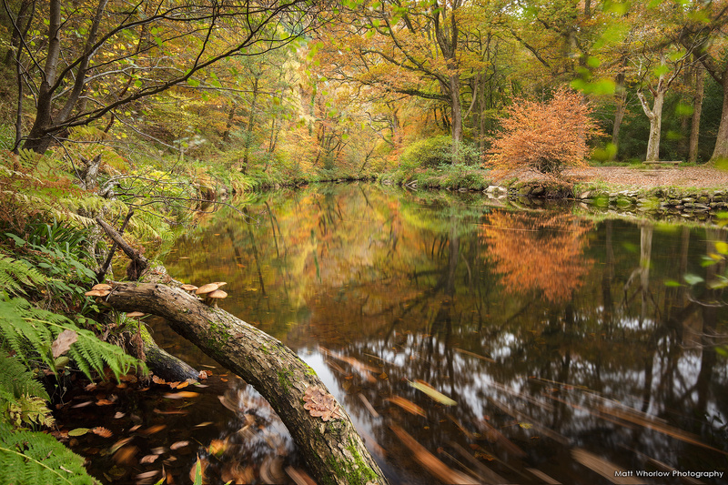 Fingle Woods - Dartmoor
