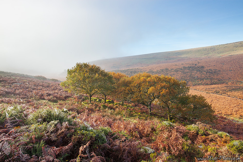 Wistmans Wood - Dartmoor