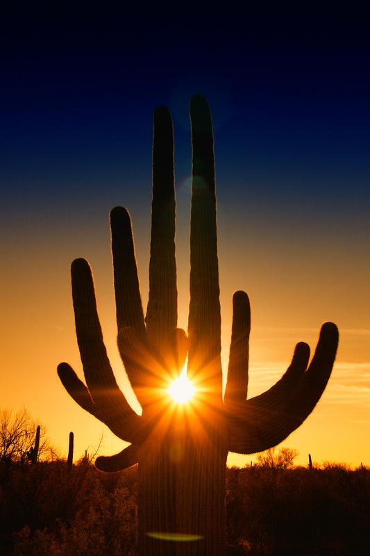 Giant Saguaro at Sunset - Arizona