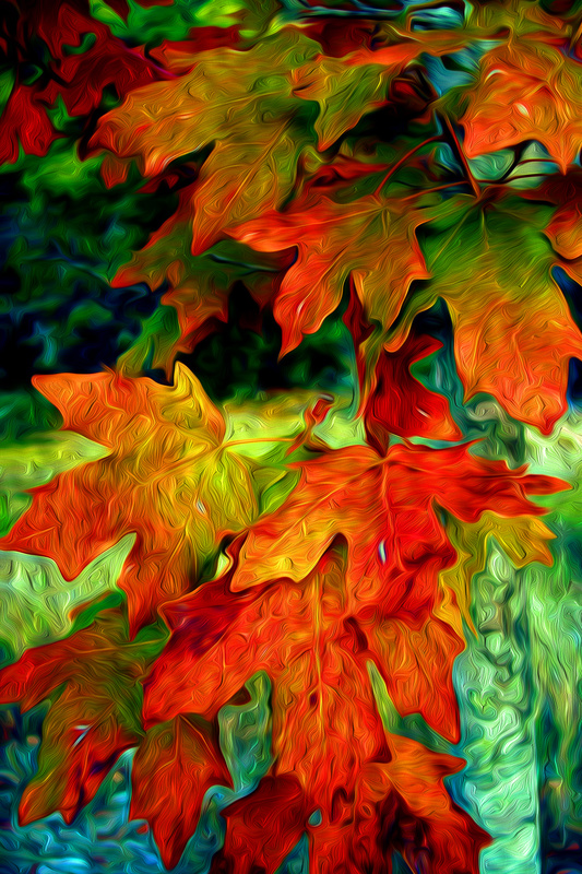 Maple Leaves - Photo Art