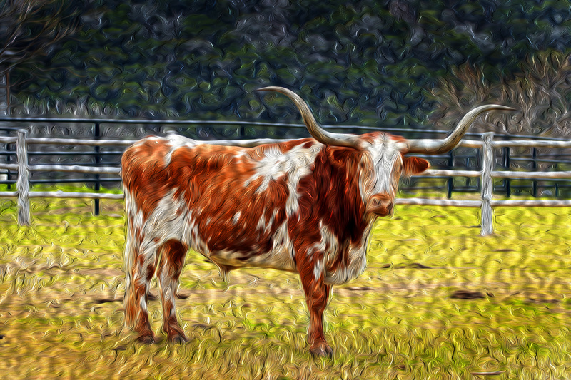 Longhorn - Photo Art