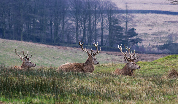 lyme park national trust deer petercostellophotography