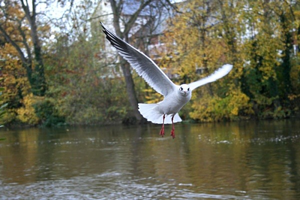 ompulsory seagull shot - miscellaneous