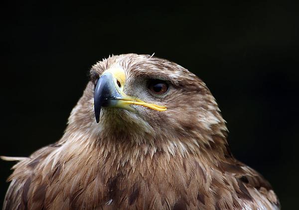 eagle - miscellaneous