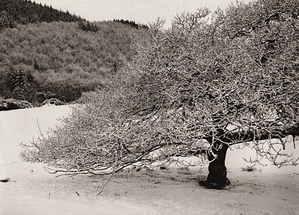 HAFOD, Ceredigion 1994 - THE WELSH LANDSCAPE - MOSTLY IN CEREDIGION