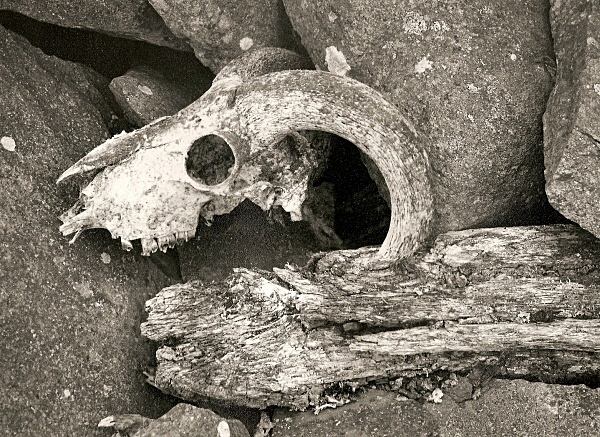 DEATH IN RUINS, Elan Valley, Powys 2004 - RADNORSHIRE