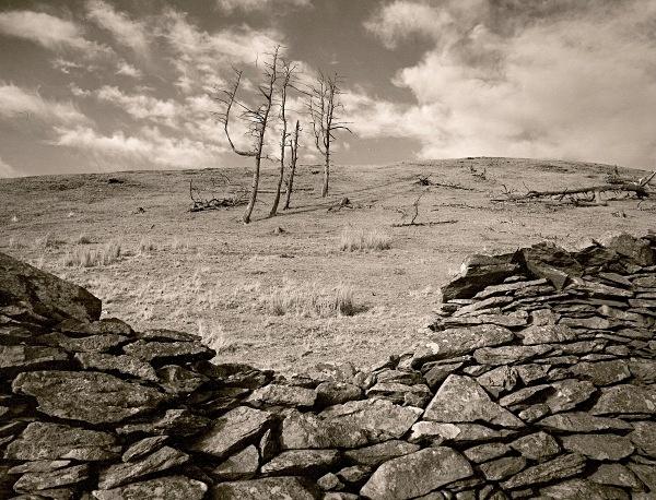 DEAD TREE, Cefn Coch, Cwmystwyth, Ceredigion 1996 - THE WELSH LANDSCAPE
