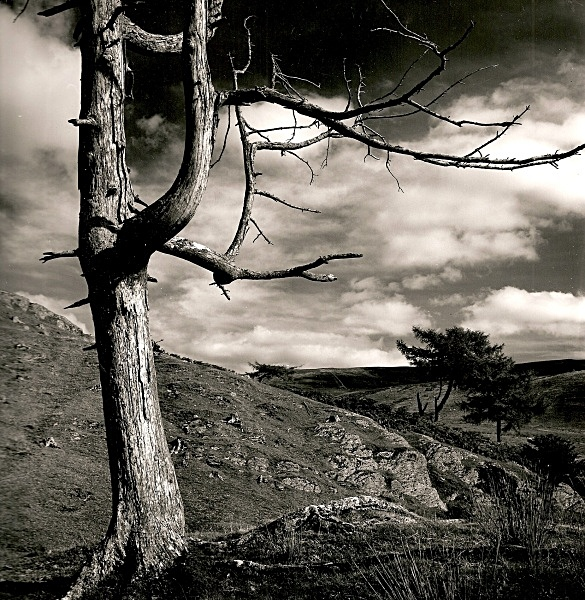 DEAD TREE, Cefn Coch, Cwmystwyth, Ceredigion 1992 - THE WELSH LANDSCAPE - MOSTLY IN CEREDIGION