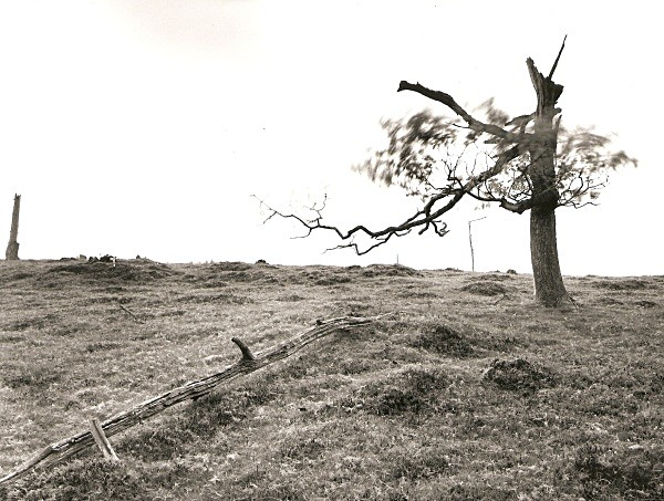 DEAD TREE, Cefn Coch, Cwmystwyth, Ceredigion 2010 - THE WELSH LANDSCAPE - MOSTLY IN CEREDIGION