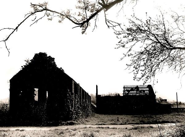 LLEWENI STABLES & COACH HOUSE, Henllan, Denbighshire 2005 - DENBIGHSHIRE